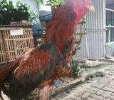 Yg butuh amunisi umur 10 bulan wa cijantung - Jakarta Timur - Koleksi