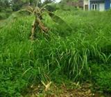 Potong rumput kebun dan rumah - Binjai Kota - Jasa