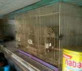 Love bird indukan - Semarang Kota - Hewan Peliharaan