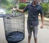 Sangkar burung murai batu - Bandung Kab. - Hewan Peliharaan