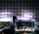 Aquarium aquascape - Sleman Kab. - Hewan Peliharaan