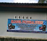 Ragil putra fish - Sleman Kab. - Hewan Peliharaan