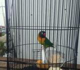 Arsip: Labet bird kalung - Gresik Kab. - Hewan Peliharaan