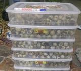 Telur Puyuh Kualitas Tinggi - Semarang Kota - Rumah Tangga