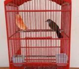 Burung cucak rawis - Sidoarjo Kab. - Hewan Peliharaan