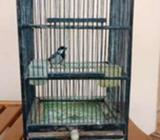 Burung glatik watu fullset - Sidoarjo Kab. - Hewan Peliharaan
