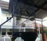 Jual lovebird biru cobal+ josan - Sidoarjo Kab. - Hewan Peliharaan