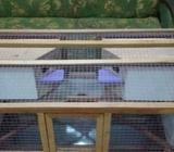 Sangkar burung bahan berkualitas desain unik minimalis - Sidoarjo Kab. - Hewan Peliharaan