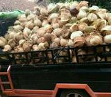 Sewa pickup cipondohh - Tangerang Kota - Jasa
