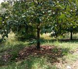 Tanah kebhn 3 ha Bojong Wanayasa Purwakarta
