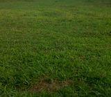 Tanah Osowilangun Benowo Rata Jalan